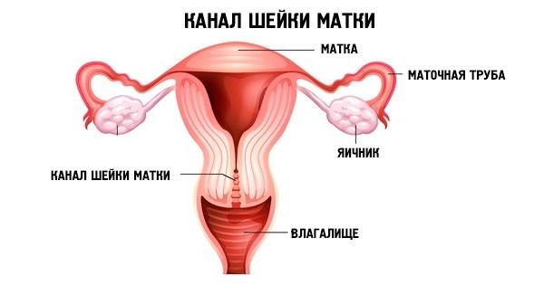 продаже квартира 3 3см длина шейки матки 21 неделя беременности клиники