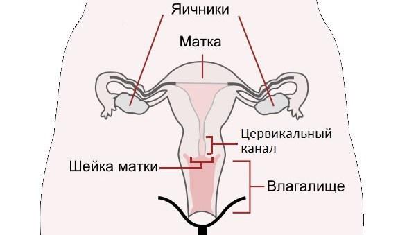 Во сне девушке быть беременной 91