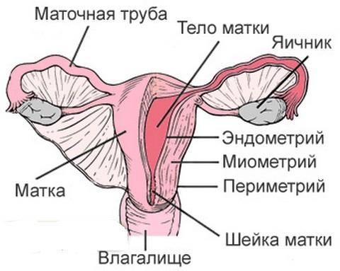 Варикоз стенок матки при беременности