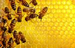 Мёд при молочнице у женщин