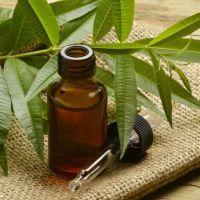 Масло чайного дерева при молочнице (кандидозе): как использовать, отзывы
