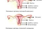 Размеры матки при климаксе