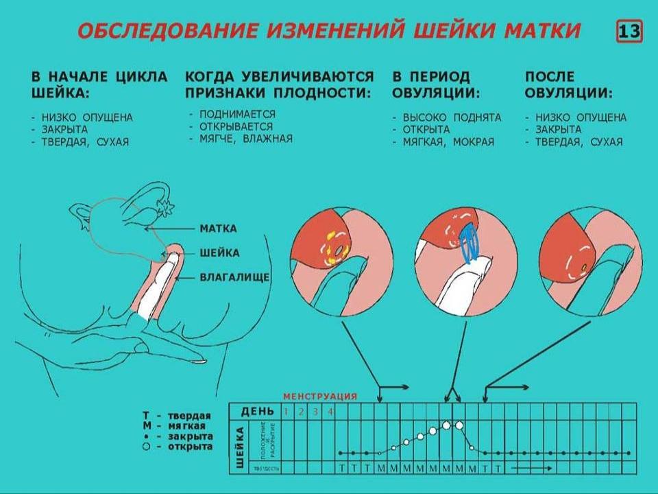 При беременности шейка мягкая или твердая