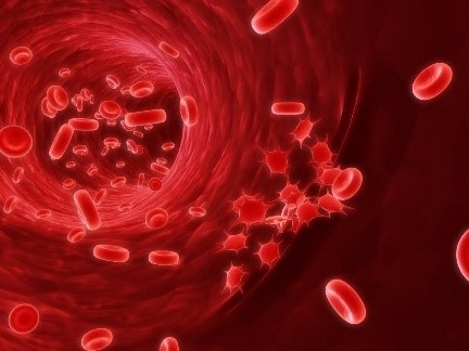 Можно ли сдавать кровь при месячных