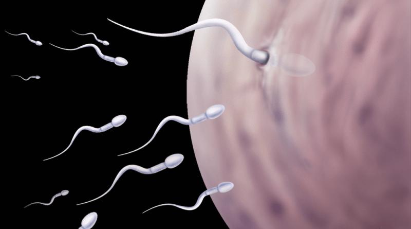 Можно ли забеременеть за день перед месячными? Вероятность беременности