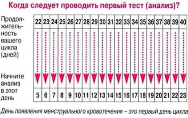 Беременность за день до месячных возможна 29