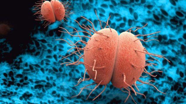 Сколько длится инкубационный период при заражении гонореей