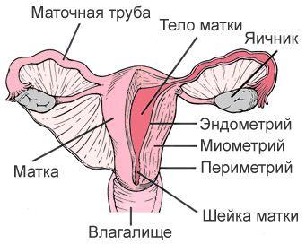 Рак шейки матки причины возникновения 19