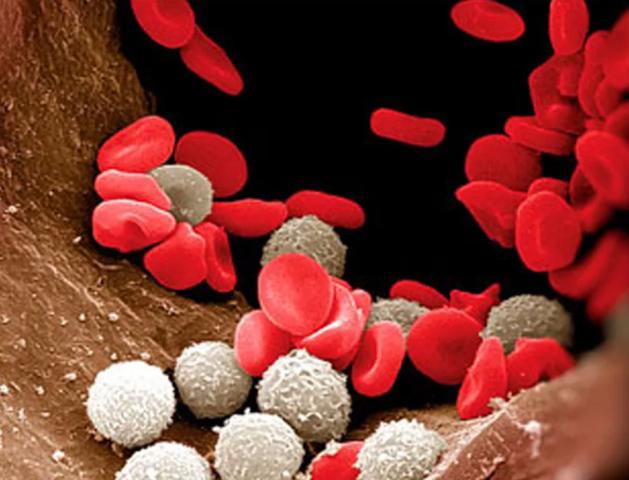 Цервикальный канал лейкоциты норма у женщин — Твой гинеколог