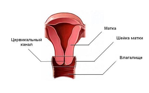 Что значит цервикальный канал сомкнут при беременности